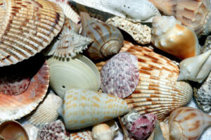 Shells For Jewellery